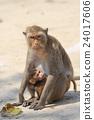 动物 拥抱 猴子 24017606