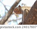 动物 哺乳动物 猴子 24017607