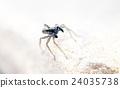spider 24035738