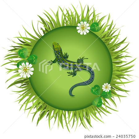 lizard on a meadow 24035750
