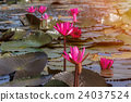 A vast lake full of water lilies 24037524