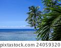 關島 風景 棕櫚樹 24059320