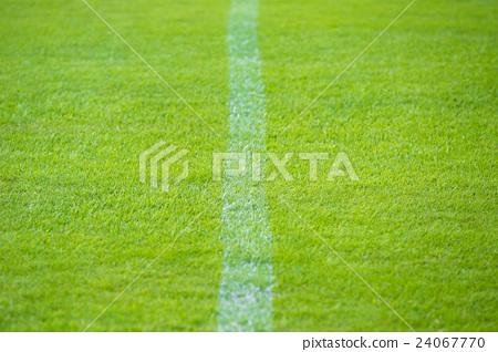 Shiba's white line 24067770