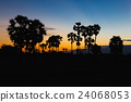 Silhouette of toddy palm at sunset twilight time 24068053