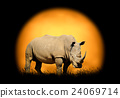 Rhino on the background of sunset 24069714