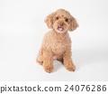 笑玩具貴賓犬 24076286