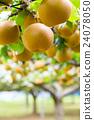 ลูกแพร์,ฤดูใบไม้ร่วง,ผลไม้ 24078050