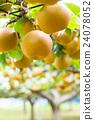 ลูกแพร์,ฤดูใบไม้ร่วง,ผลไม้ 24078052
