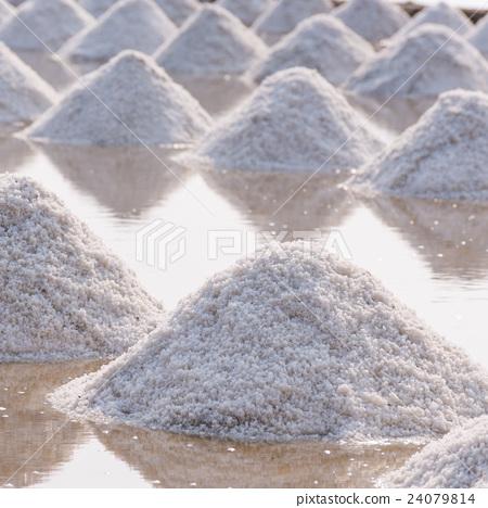 Row of sea salt in the farm 24079814