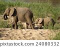 Elephants 24080332