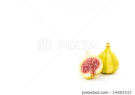 무화과 (품종 : 타이거) : Fig (cv. Tiger) 24083337