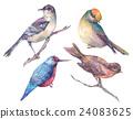 水彩画 水彩 鸟儿 24083625