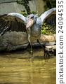 우에노 동물원, 우에노도부츠엔, 조류 24094535