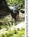 上野动物园 鹈形目 鲸头鹳 24094569
