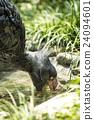우에노 동물원, 우에노도부츠엔, 조류 24094601