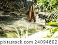 上野动物园 鹈形目 鲸头鹳 24094602