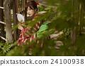 和服女性肖像 24100938
