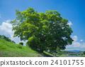 樹木 樹 木頭 24101755