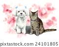 cat, pussy, dog 24101805