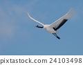 Cranes flight to the blue sky back 24103498