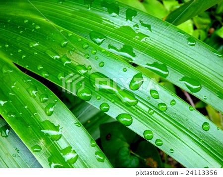 물방울, 이슬 방울, 잎 24113356