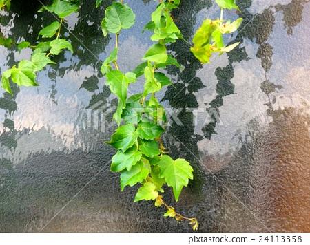 植物 植物學 植物的 24113358