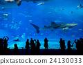 Whale shark at Churaumi aquarium in Okinawa 24130033