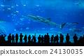 Aquarium in Japan 24130035