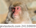 Adorable Monkey 24130609