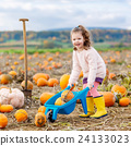 little girl farming on pumpkin patch 24133023