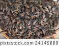 Bee building nest and honeycomb on rusty steel 24149889