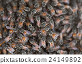 Bee building nest and honeycomb on rusty steel 24149892
