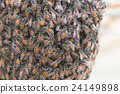 Bee building nest and honeycomb on rusty steel 24149898