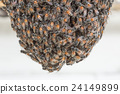 Bee building nest and honeycomb on rusty steel 24149899
