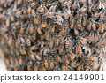Bee building nest and honeycomb on rusty steel 24149901