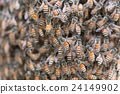 Bee building nest and honeycomb on rusty steel 24149902