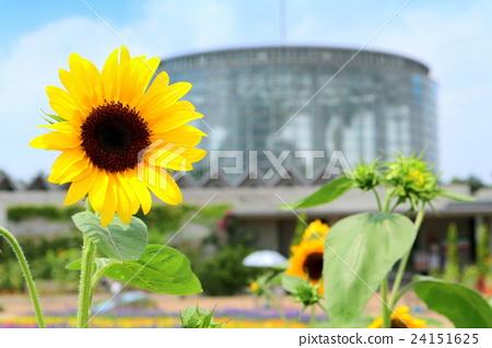 三和媒體花博物館的向日葵千葉市花卉美術館8月千葉市千葉市 照片