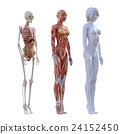 肌肉發達 肌肉 骨架 24152450