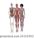 肌肉 肌肉发达 骨架 24152452