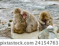 动物 猴子 温泉 24154763
