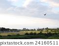 一隻烏鴉在米澤的天空中飛翔 24160511