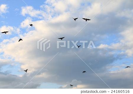 一隻飛翔的烏鴉 24160516