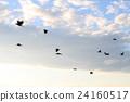 一隻烏鴉在黃昏飛行 24160517