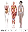 肌肉發達 肌肉 比較 24162187