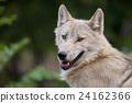 신린 늑대 24162366