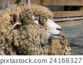 羊侧身 24166327