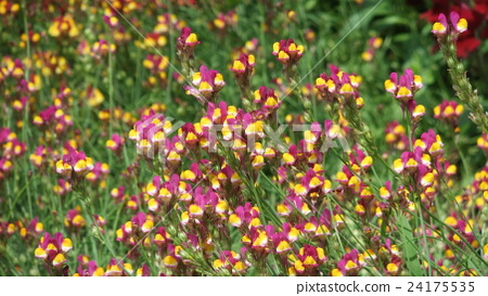 Cute flower 24175535