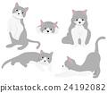 猫 猫咪 小猫 24192082