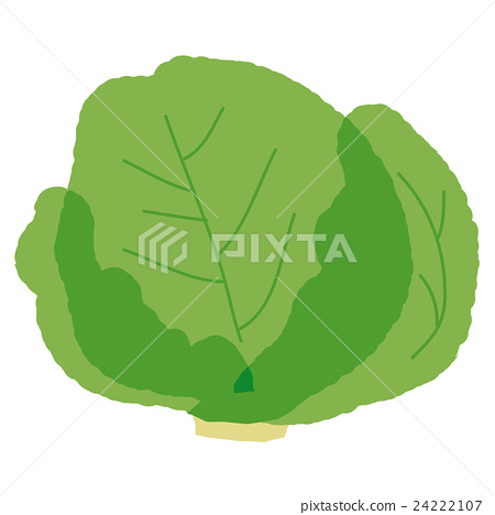 lettuce 24222107