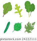 綠葉蔬菜6種套 24222111